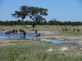 Gnus zebras chobe national park.jpg