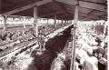 1973 Ferma de ingrasare a ovinelor Fibis, Timis.JPG