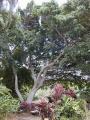 A Hawaii-szigeteken (Maui, Kahului)