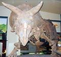 A Triceratops csontváza a Smithsonian Temészettörténeti Múzemban (Smithsonian Museum of Natural History)